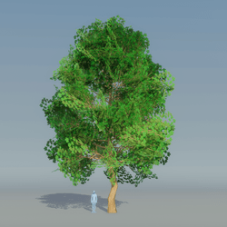 Maple Tree dark Green 2