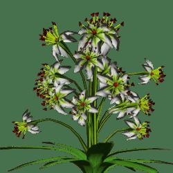 Star Flowers 16