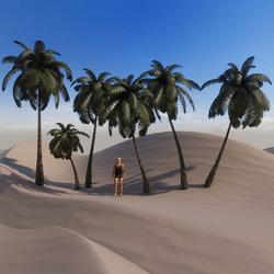 Bundle of 6 Single Palm Trees