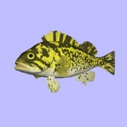 Rockfish BlackYellow Animated
