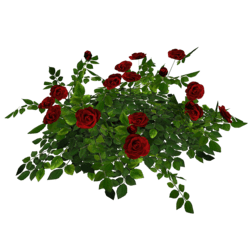 Rose Bush - Red