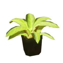 YippyKay Potted Plant