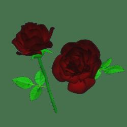Single Dark RED ROSE