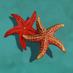 Starfish Red Low Poly