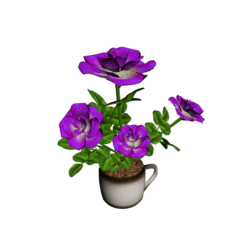 Roses in Coffee Cup - Purple