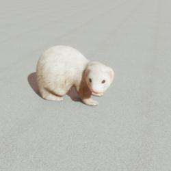 Animals - Ferret