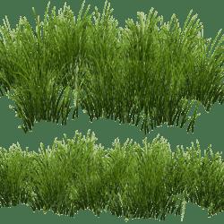 Grass Patch -Oval v2