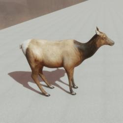 Animals - Elk