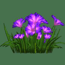 Petunia 16