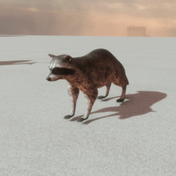 Animals - Racoon