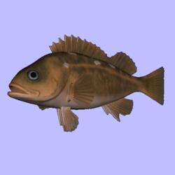 Rockfish Honeycomb Animated