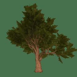 Shady Summer Tree