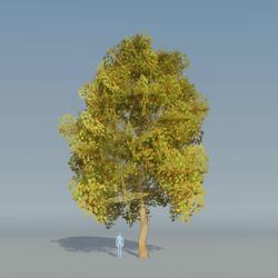 Maple Tree Autumn 4