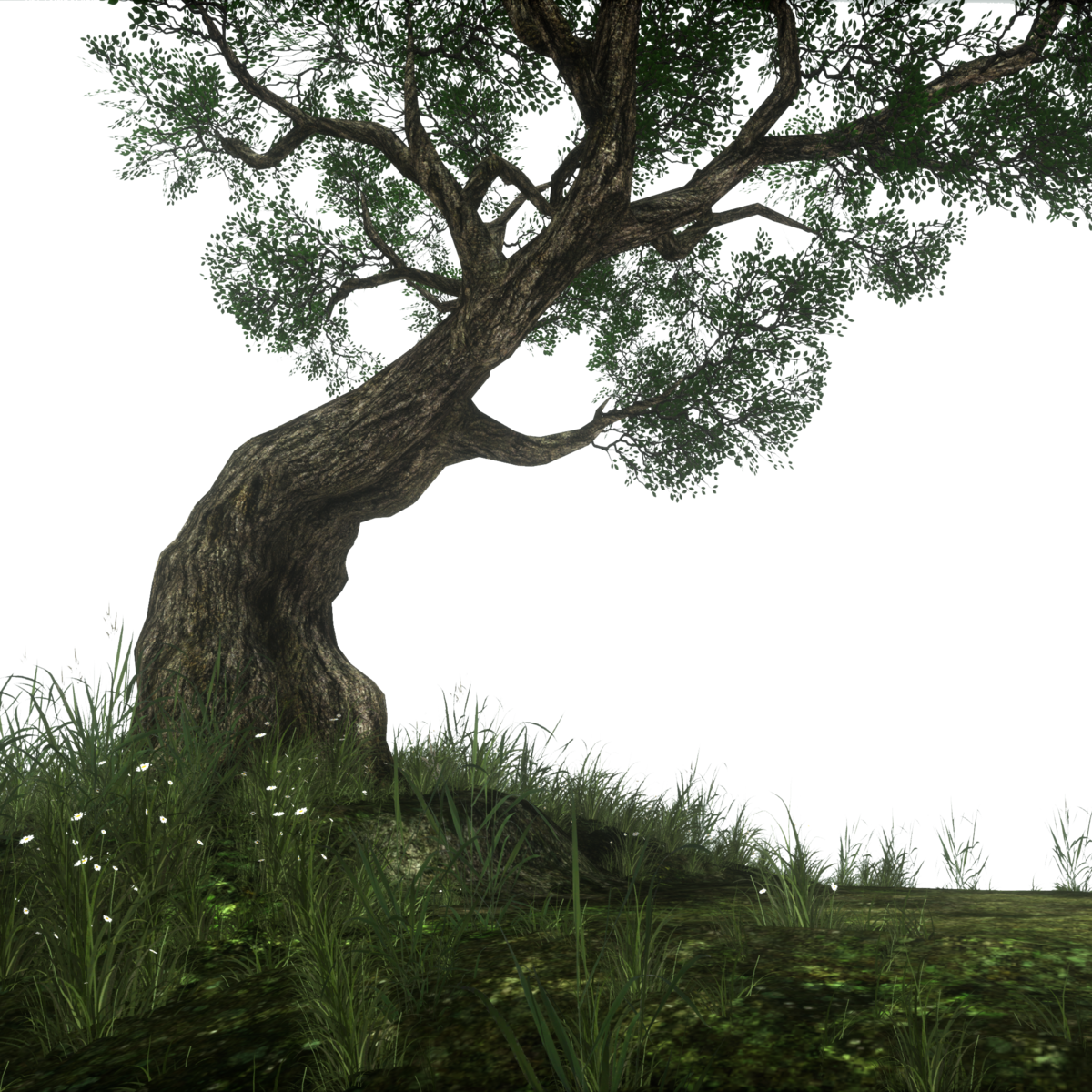 Twisted Tree with grassy base