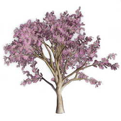 Watercolor Pink Oak Tree